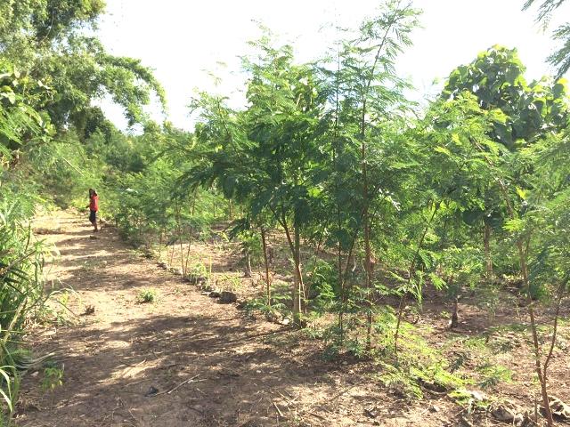 Taman Eden Kabupaten Kupang tingkatkan ekonomi Masyarakat Desa