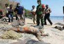 Mayat Tanpa Identitas Ditemukan di Pantai Mbojo Mukusaki Ende