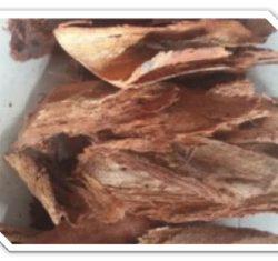 Poltekes Kupang mengolah kulit Faloak