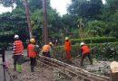 84 Desa Baru di NTT yang akan dibangun jaringan listrik