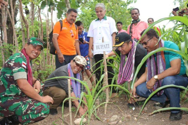 Desa Camplong II Kembangkan Pakan Ternak Lamtoro Teramba